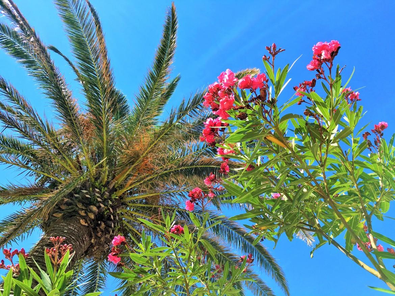 Grottammare palm