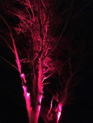 Blenheim trees