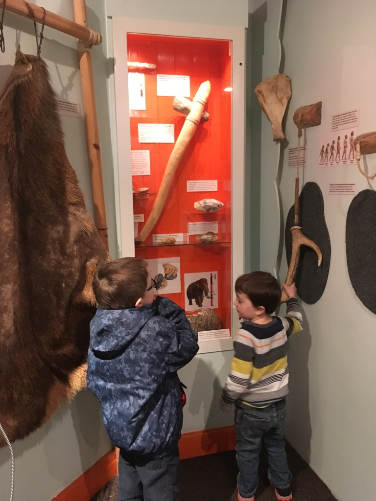 Stone Age exhibit at Stevenage Museum