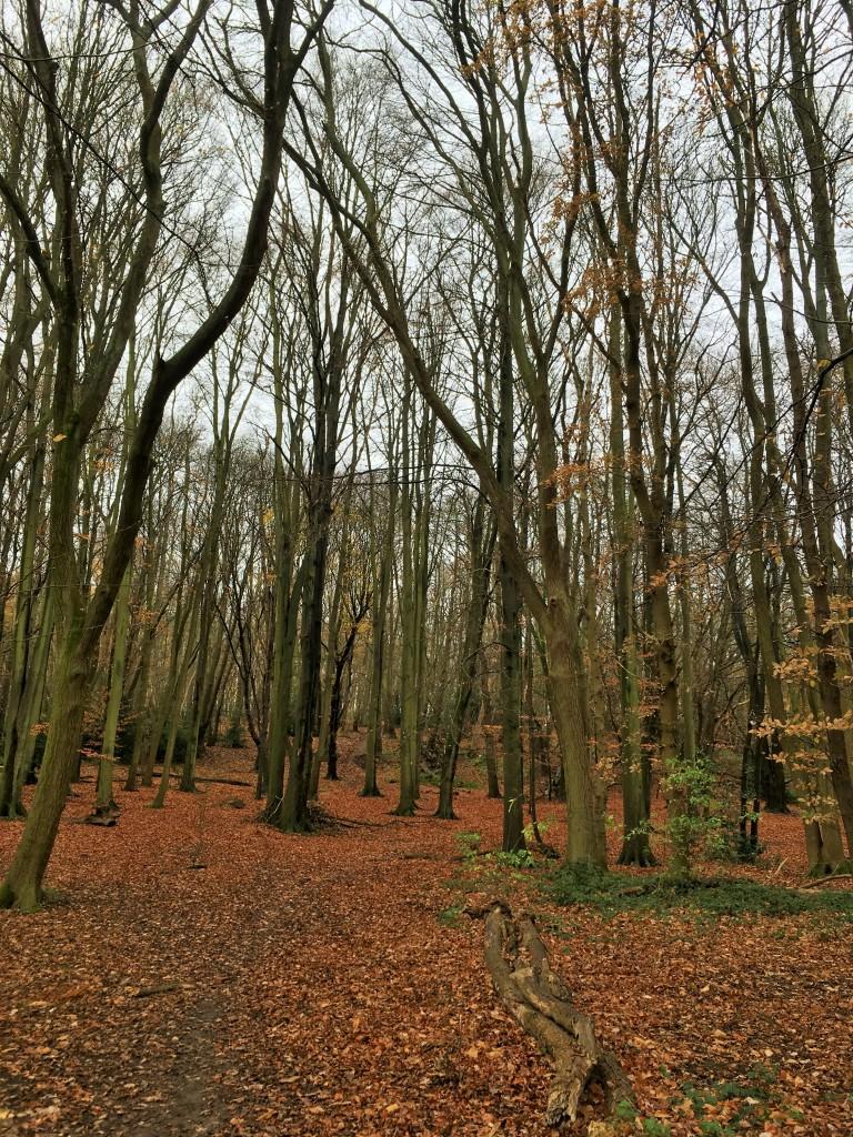 Mardley Heath in autumn