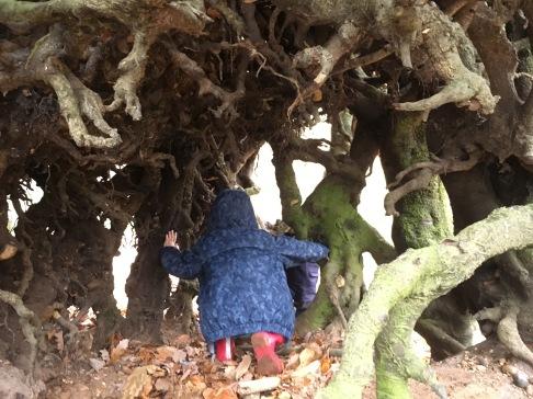 "Exploring the ""monster tree"" on Mardley Heath"