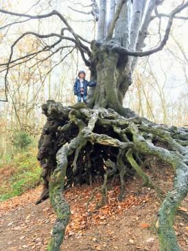 A natural climbing frame at Mardley Heath