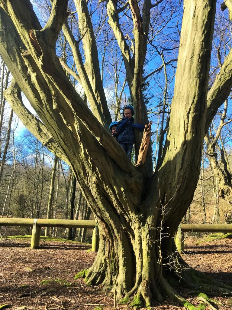 Tree climbing at Mardley Heath